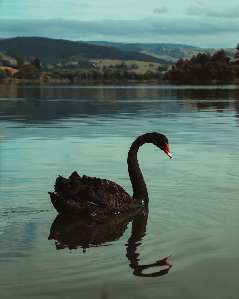black swan event and financial crisis